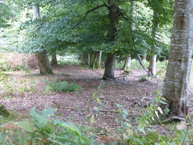 deer grazing1