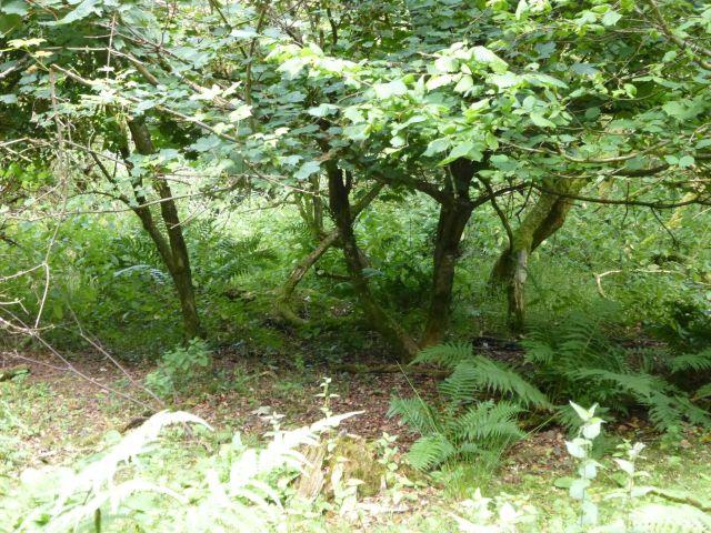deer grazing3