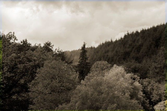 A valley of trees - Today's view from the houses at Clifford Bridge