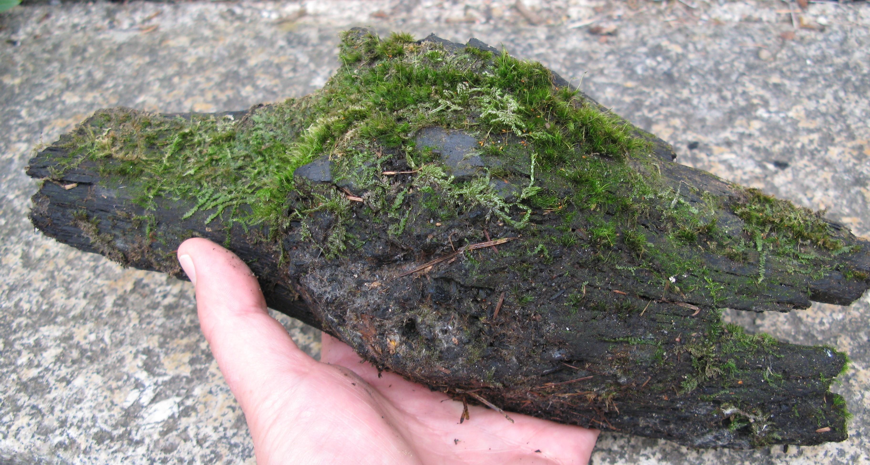 charcoal-chunk