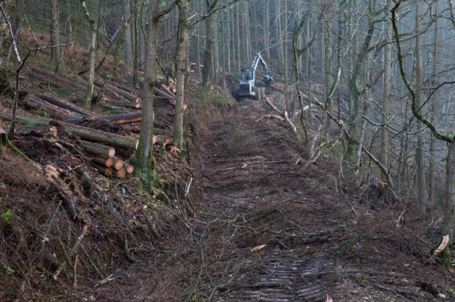Remnants of oak stand where the larch trees were cleared (photo: P.Moody)