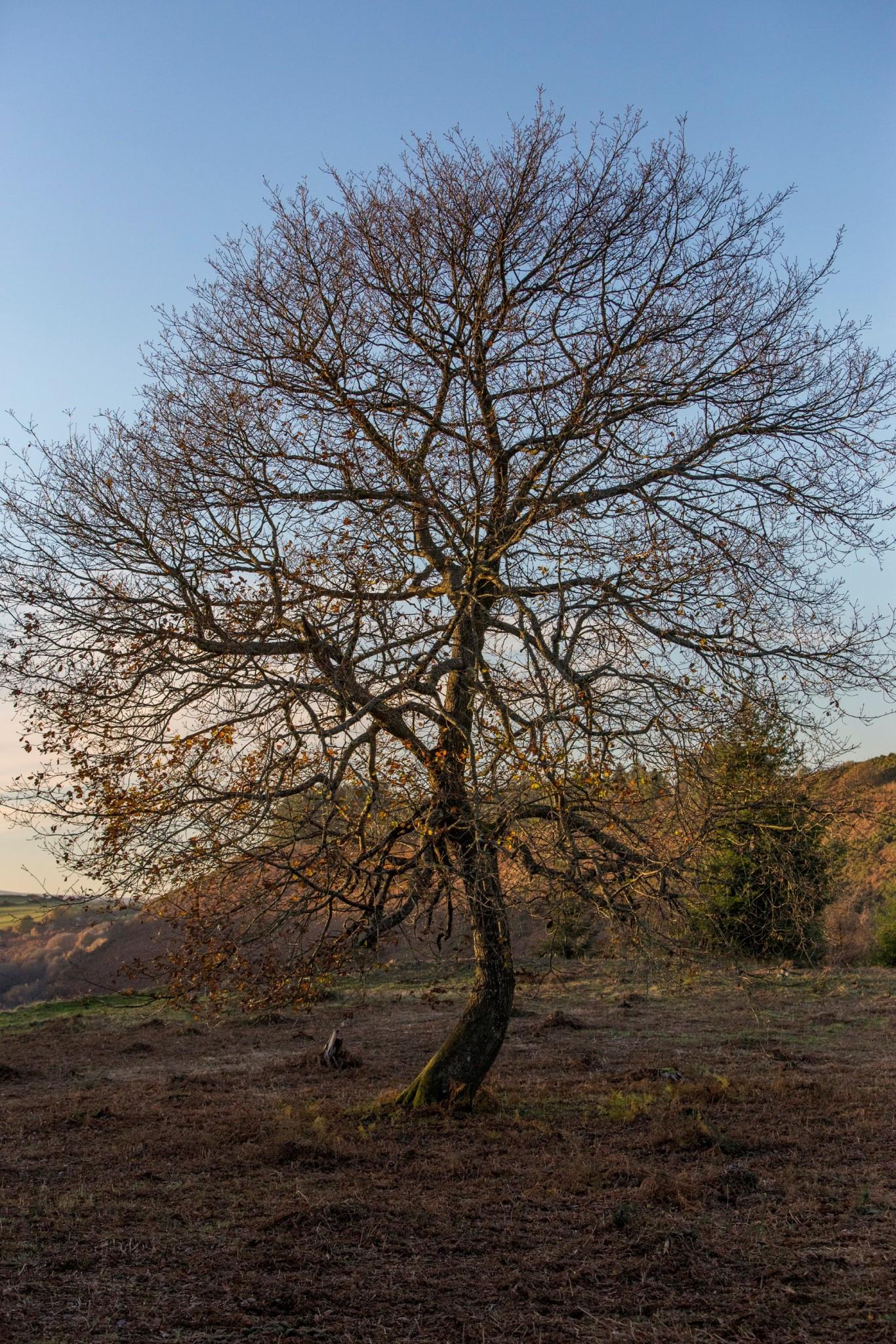 oak-hillfort